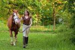 lead-horse